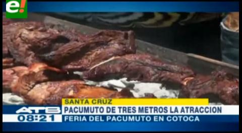 Presentaron pacumuto de 3 metros en la Feria de Cotoca