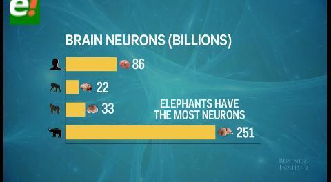 ¿Quién tiene el mejor cerebro del mundo animal?