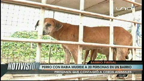 Santa Cruz: Perro con rabia mordió  a cerca de 20 personas