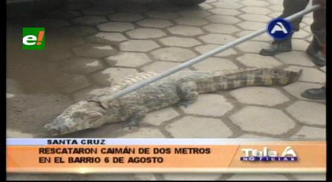 Capturan a un lagarto en la zona de Los Lotes
