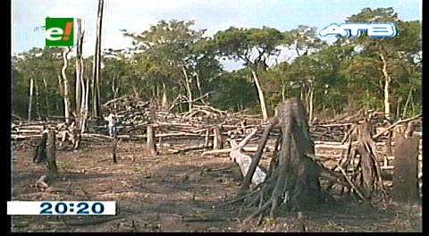 Tasa de deforestación supera 300.000 hectáreas por año