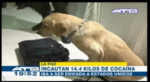 Un can de la Felcn frustró el envío de un cargamento de droga a EEUU
