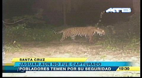 Vecinos sospechan que hay tres jaguares por la G-77