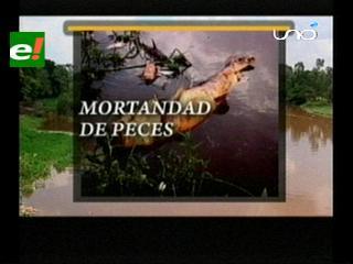 Desastre ecológico, mortandad de peces en el río Chané