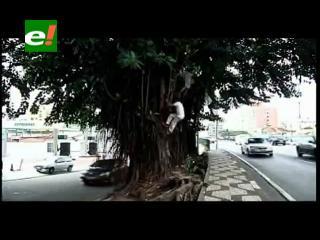 Brasil: Indigentes viven en los árboles