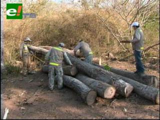 ABT decomisa troncos valuados en $us 200 mil