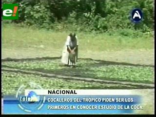 Cocaleros del Trópico cochabambino piden ser los primeros en conocer el estudio de la coca