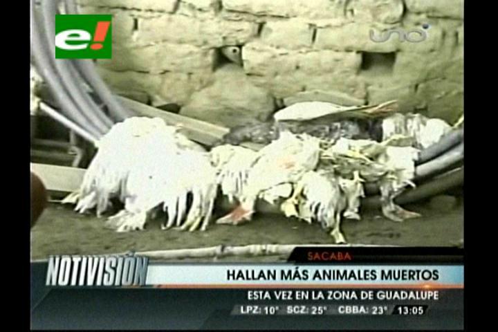 Hallan en Cochabamba a más de 30 animales muertos violentamente