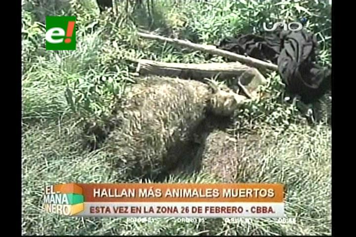 Atacan 12 ovejas y misteriosa muerte de animales se traslada a Tiquipaya