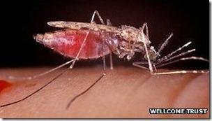 Cada año, la malaria mata a unas 600.000 personas e infecta a más de 200 millones.