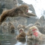 JAPAN-LIFESTYLE-ANIMAL