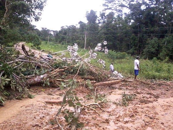 Ixiamas pierde 600 mil bolivianos en sembradíos por efecto de las lluvias, clama ayuda