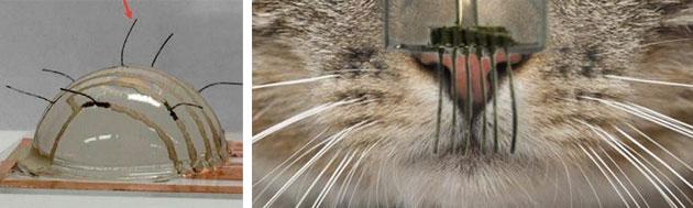 Robots más sensibles gracias a los bigotes de los gatos