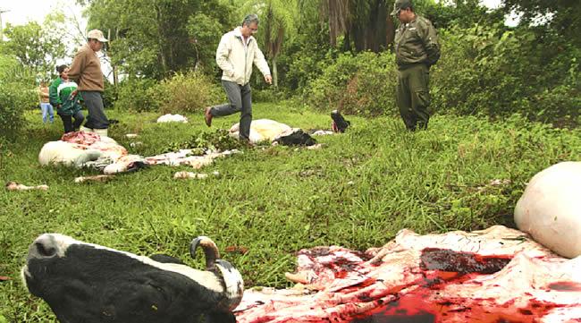 Abigeato agobia a ganaderos  y atenta contra la salud de consumidores
