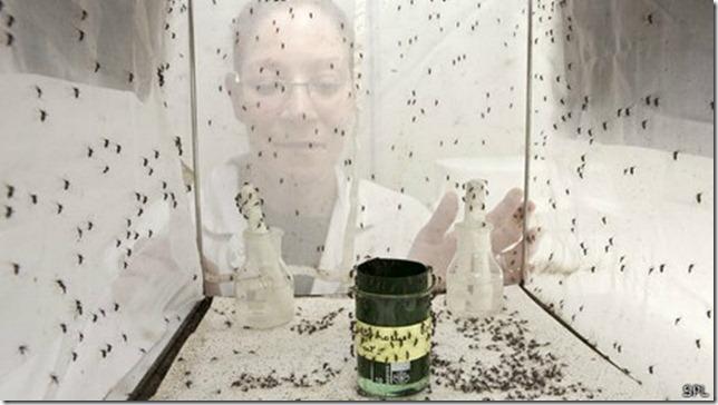 Expertos consideran que la mejor forma de combatir a los mosquitos vectores es estudiándolos.
