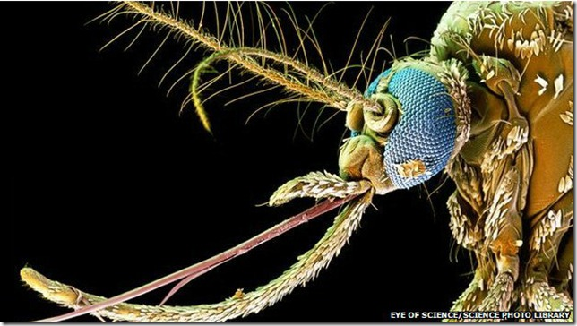 mosquitoes_diseases
