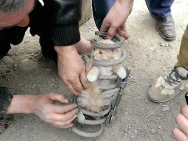 Rusia: Condujo más de 80 kilómetros con un gato en la suspensión
