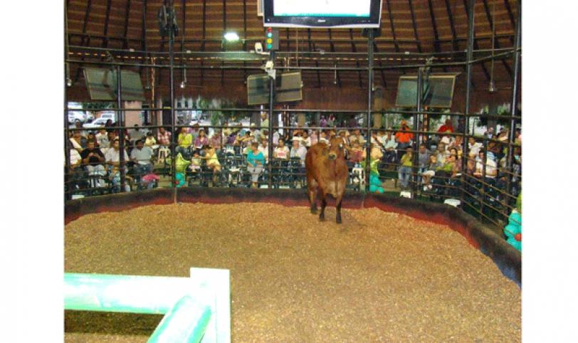 Santa Cruz cuenta con cuatro centros de remate donde el productor comercializa su ganado.