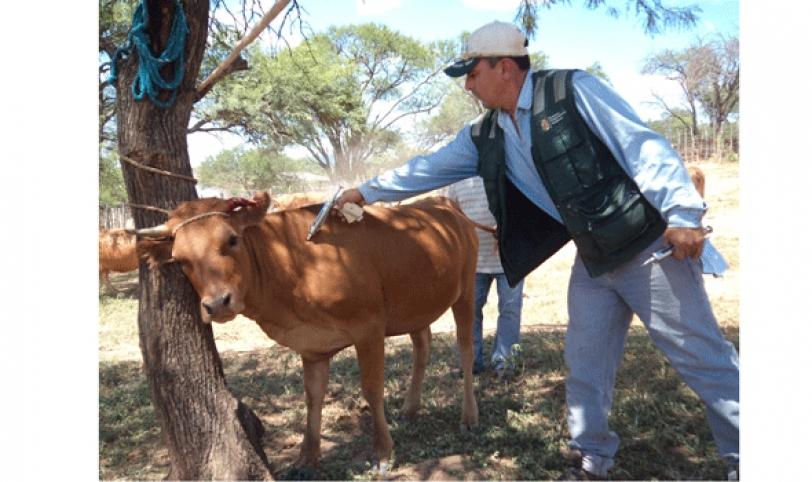 La vacunación es necesaria para mantener la certificación de Bolivia, como pais libre de fiebre aftosa.