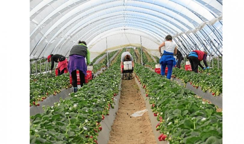 La producción de hortalizas es un ejemplo.