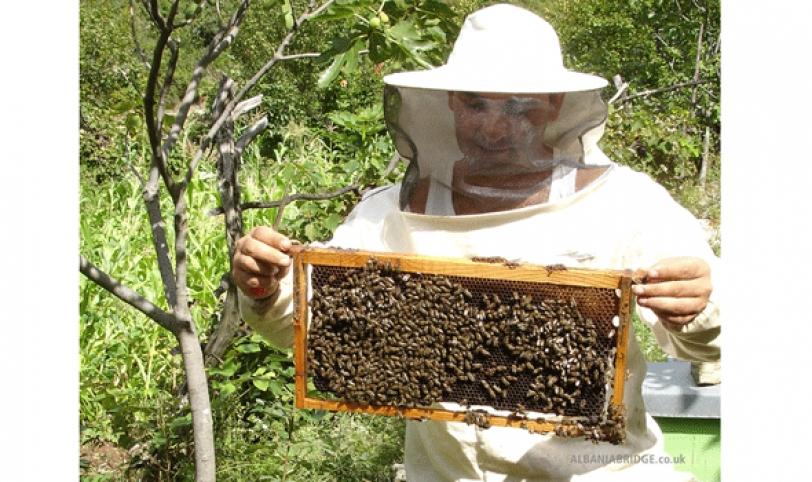 Los productores de miel esperan llegar a crecer a pesar de las adversidades del clima.