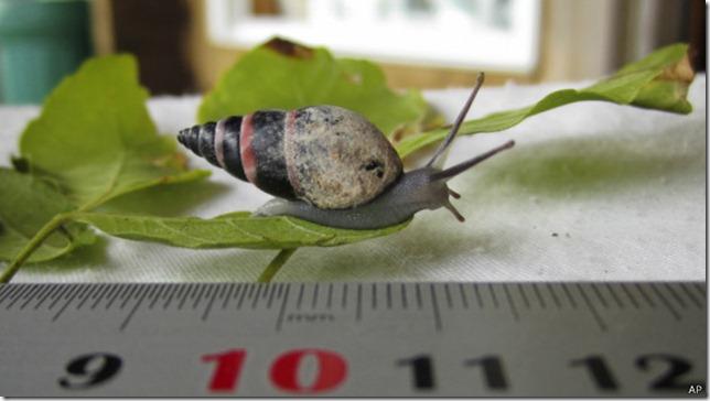 _sp_aldabra_snail_