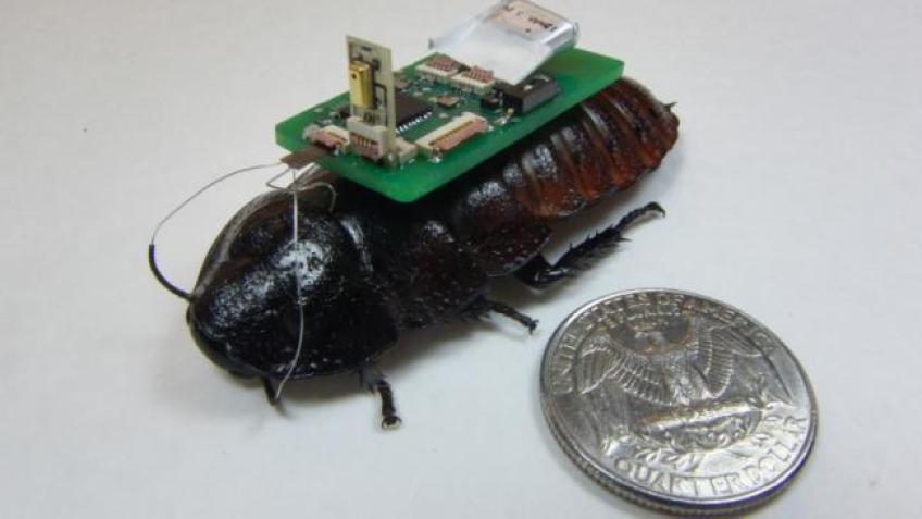 Bozkurt Roach Header