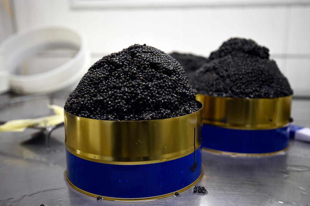 El caviar negro