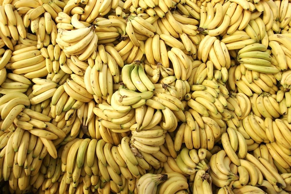 Los plátanos Cavendish