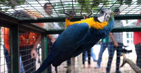 Un operativo rescató a animales y aves silvestres que iban a ser comercializadas