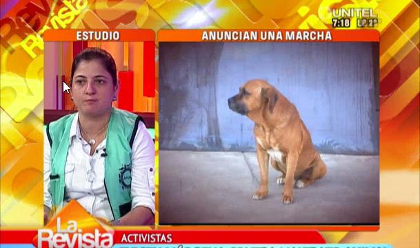 Santa Cruz: Piden modificación del Proyecto de ley contra el maltrato animal