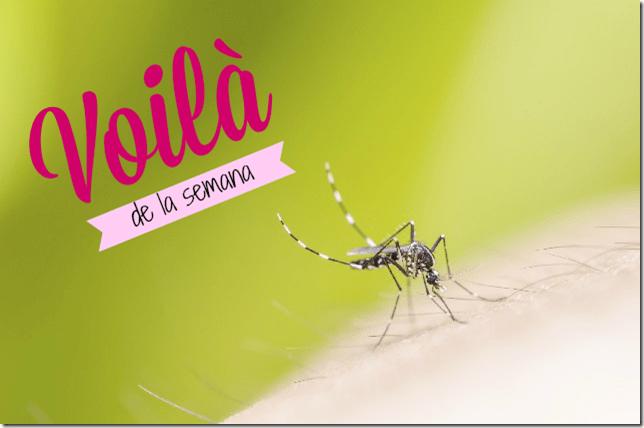 por-que-eres-un-iman-de-mosquitos