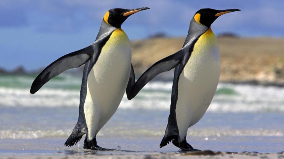 Foto: Necrofilia y pingüinos depravados: las prácticas sexuales más raras del reino animal