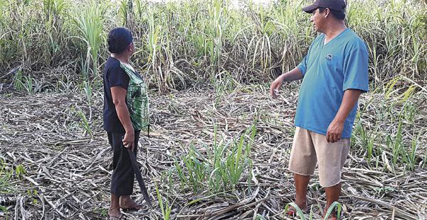 Este proyecto de caña de azúcar está en la comunidad Itonama. Está dentro de las denuncias de los 153 proyectos cuestionados por desvíos