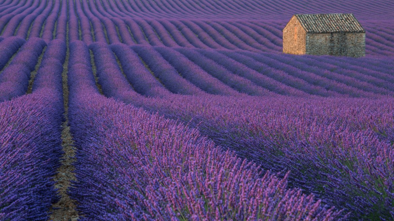 Valensole, Francia