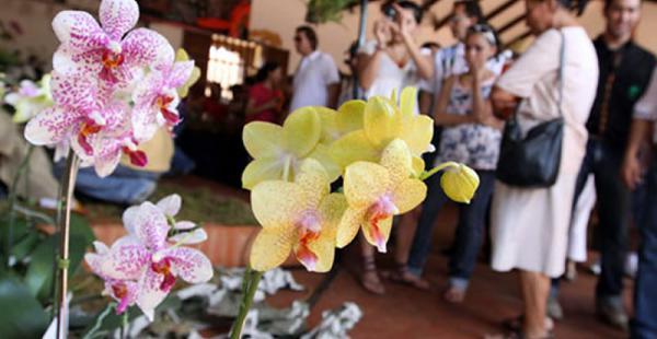El festival de las Orquídeas tuvo una buena respuesta del público. Cientos de personas lo disfrutaron
