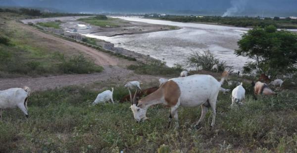Se teme que las aguas no alcancen los niveles de pasadas gestiones. La causa es el fenómeno de El Niño.