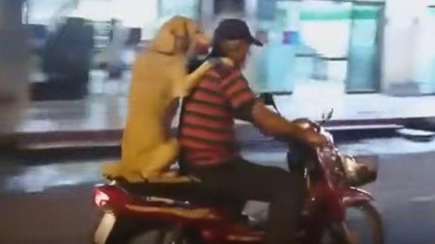 Perro montado en una moto causa admiración en YouTube [VIDEO]