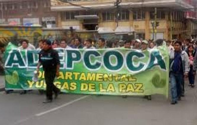 Cocaleros de Los Yungas anuncian bloqueo de caminos desde este miércoles