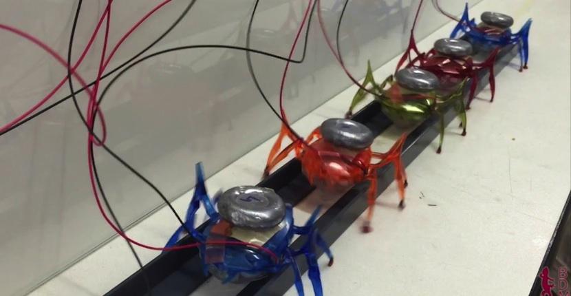 diminutos robots