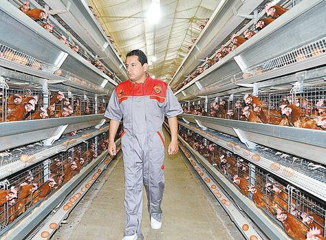 Santa Cruz. Un trabajador de la granja de pollos San Lorenzo.