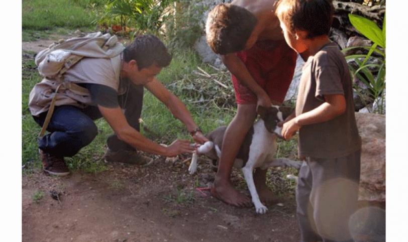 ATAQUE.  A diario se tiene reporte por mordeduras y agresiones de perros, en su mayoría, y gatos.