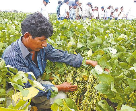 Santa Cruz. Un productor controla las plantaciones de soya.