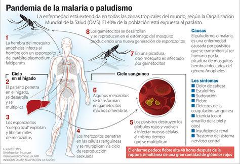Info malaria.