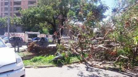 Av. Beni. La caída de un árbol provocó caos vehicular.