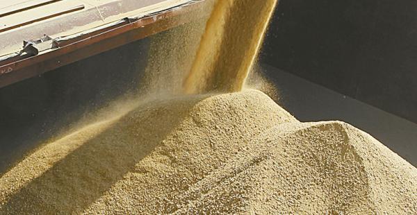 Los productores de soya están preocupados por la inserción al bloque