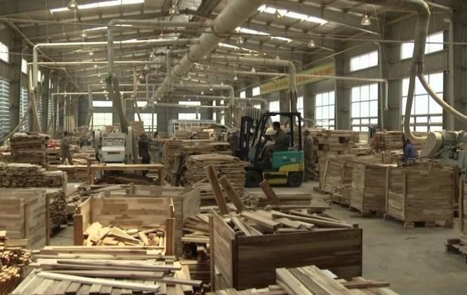 Sector forestal se declara en quiebra y alerta que peligran 90.000 fuentes de empleo