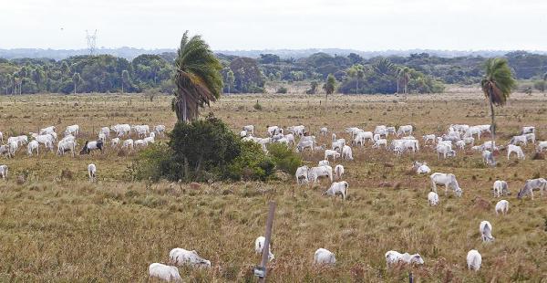 Este es el ganado reincautado y que usufructuaba una de las familias que tildan de 'cuello blanco'