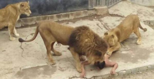 Franco Ferrada se habría inspirado en el profeta Daniel que arrojado a los leones, salvó su vida gracias a su fe