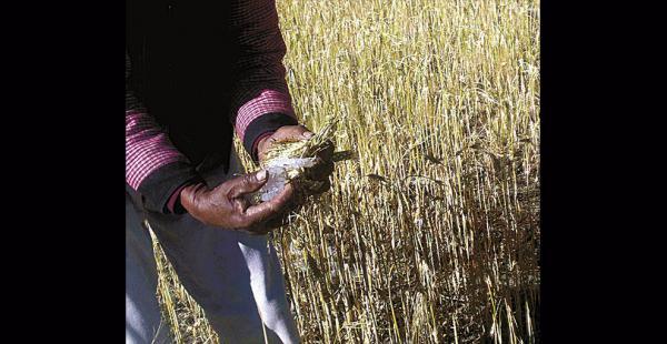 El fenómeno también destruyó 84.000 hectáreas de cultivos